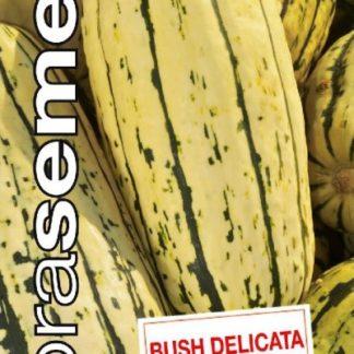 Tykev obecná Bush Delicata - pruhovaná (Dobrasemena)