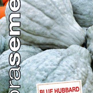 Tykev velkoplodá Blue Hubbard - modrošedá (Dobrasemena)