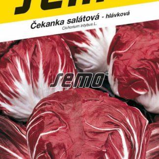 Čekanka salátová Palla Rosa 3 - hlávková, červená (Semo)