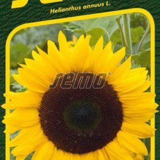 Slunečnice roční Mezzulah F1 - žlutá (Semo)