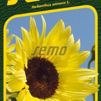 Slunečnice roční Buttercream F1 - krémová (Semo)