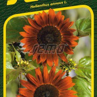 Slunečnice roční Claret F1 - mahagonová (Semo)