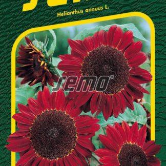 Slunečnice roční - červená (Semo)