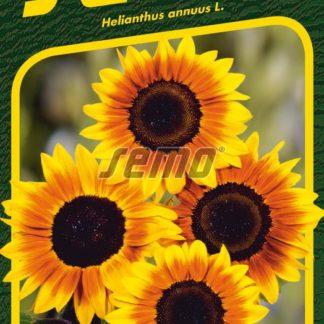 Slunečnice roční Orange Mahogany Bicolour F1 - dvoubarevná (Semo)