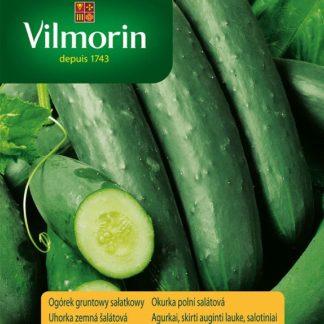 Okurka polní salátová Jazzer F1 (Vilmorin)