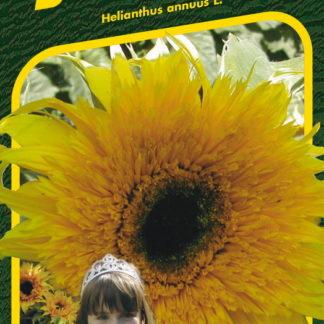 Slunečnice roční Baby Bear F1 - žlutá (Semo)