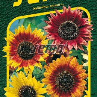 Slunečnice roční Autumn Beauty - směs (Semo)