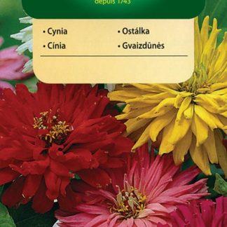 Ostálka sličná kaktusová - směs (Vilmorin)