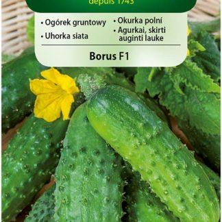 Okurka polní Borus F1 (Vilmorin)