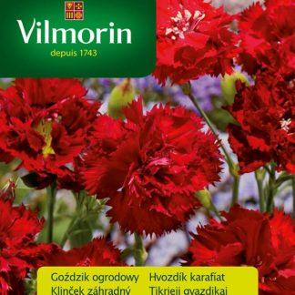 Hvozdík karafiát Szabo - červený (Vilmorin)