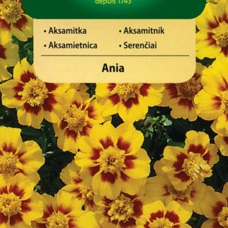 Aksamitník rozkladitý Ania - jednotlivý (Vilmorin)