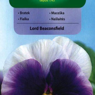 Maceška velkokvětá švýcarská Lord Beaconsfield - fialová (Vilmorin)