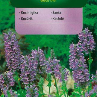 Šanta hroznovitá (Vilmorin)
