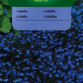 Lobelka drobná Blue Carpet - modrá (Vilmorin)