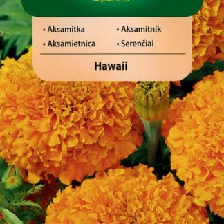Aksamitník vzpřímený Hawaii - oranžový (Vilmorin)