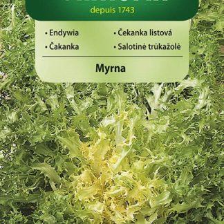 Čekanka listová Myrna (Vilmorin)