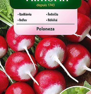 Ředkvička Poloneza - červenobílá, obalovaná semena (Vilmorin)