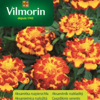 Aksamitník rozkladitý Flamenco - žlutočervený (Vilmorin)