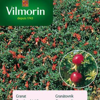 Granátovník - granátové jablko (Vilmorin)