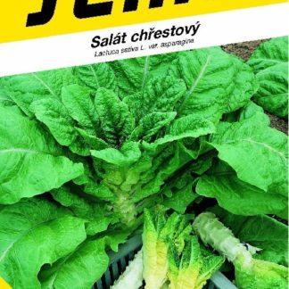 Salát chřestový Celtuce (Semo)