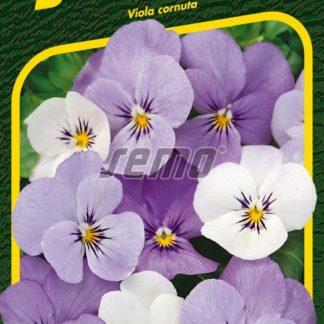 Miniviolky Sorbet YTT - mění barvu (Semo)