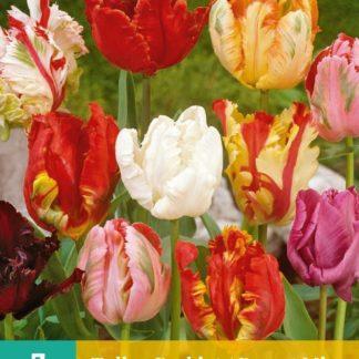 Tulipán Parrot Mix (7 cibulí, směs, karta)