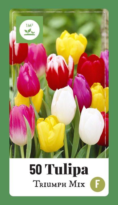 Tulipán Triumph Mix (50 cibulí, směs, XXL síťka)