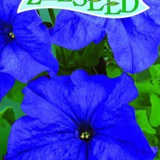 Petúnie - modrá (Zelseed)