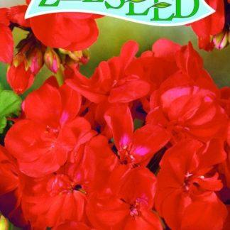 Pelargonie páskatá (muškát) F1 - tmavočervená (Zelseed)