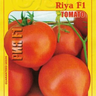 Rajče tyčkové Riya F1 - velké plody (GEOSEMselect)