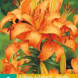 Lilie asijská Orange (2 cibule, oranžová, karta)
