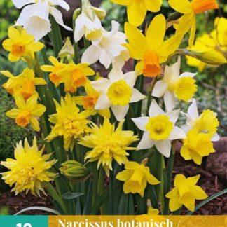 Narcis botanický Mix (10 cibulí, směs, karta)