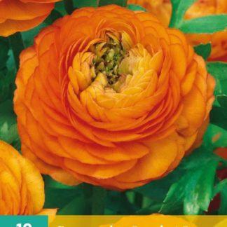 Pryskyřník plnokvětý Orange (10 cibulí, oranžový, karta)