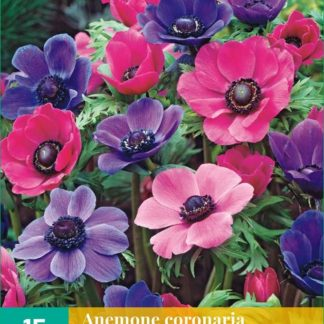 Sasanka věncová Purple-Pink Mix (15 cibulí, směs, karta)