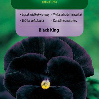 Maceška velkokvětá Black King - tmavě fialová (Vilmorin)
