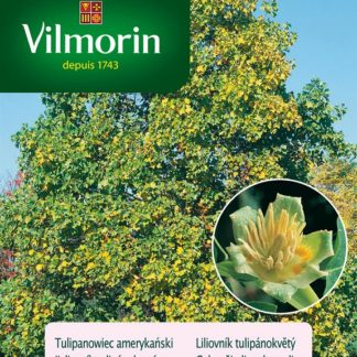 Liliovník tulipánokvětý (Vilmorin)