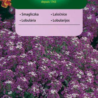Laločnice přímořská Royal Carpet - fialovo-bílá (Vilmorin)