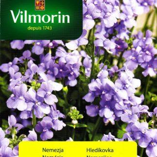 Hledíkovka - modrá (Vilmorin)