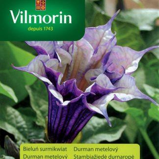 Durman metelový Ballerina - fialovo-bílý (Vilmorin)