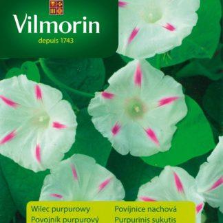 Povíjnice nachová Seta - bílá s proužky (Vilmorin)