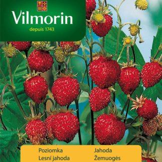 Lesní jahoda Mignonette (Vilmorin)