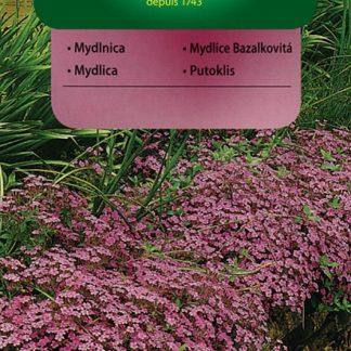 Mydlice bazalkovitá - růžová (Vilmorin)