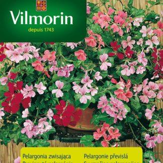 Pelargonie štítnatá - převislý muškát, směs (Vilmorin)