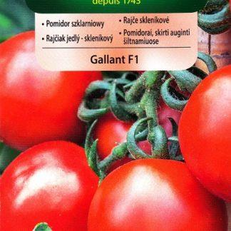 Rajče skleníkové Gallant F1 (Vilmorin)