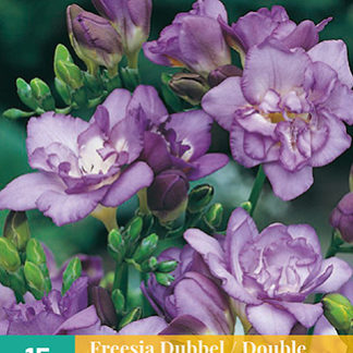 Frézie Double Blue (15 cibulí, fialová)