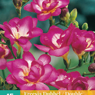 Frézie Double Pink (15 cibulí, růžová)