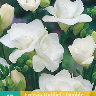 Frézie Double White (15 cibulí, bílá)