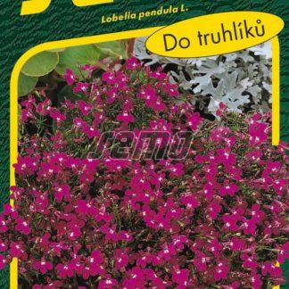 Lobelka drobná Cascade - převislá, červená (Semo)
