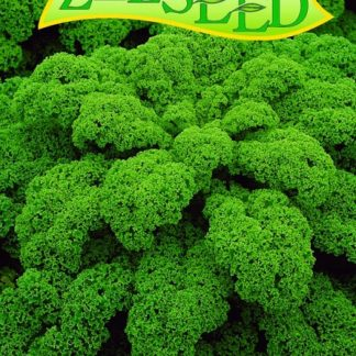 Kadeřávek Vitessa - zelený (Zelseed)