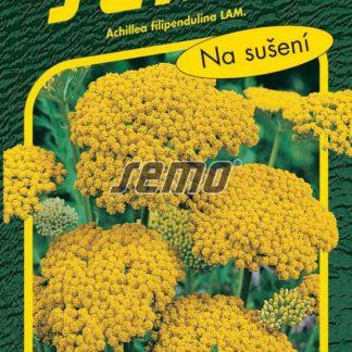 Řebříček tužebníkový Cloth of Gold - žlutý (Semo)